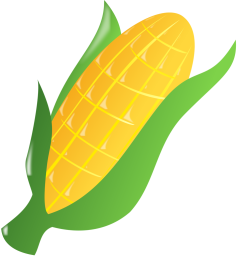 17207-illustration-of-an-ear-of-corn-pv