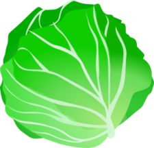 cabbage-md